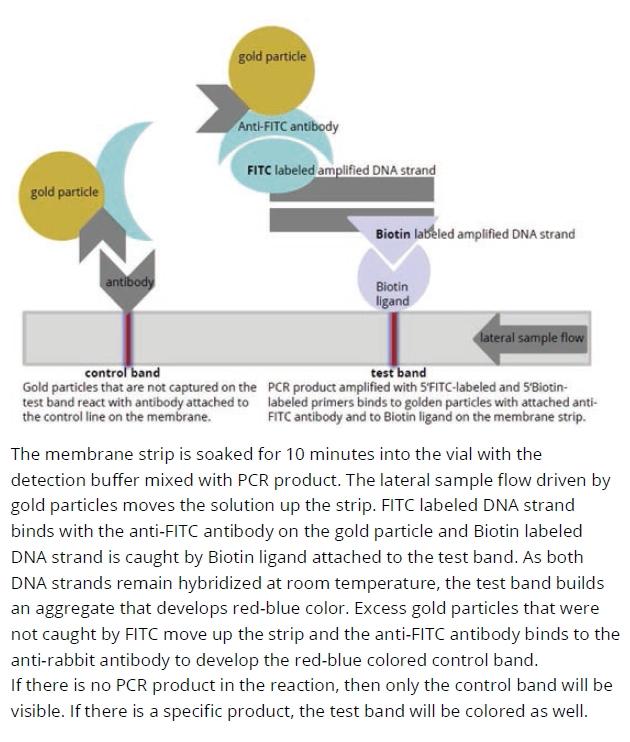 PCRbeam™ Fast PCR Detection Kit