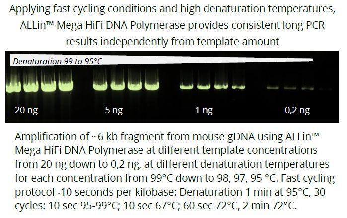 ALLin™ Mega HiFi DNA Polymerase
